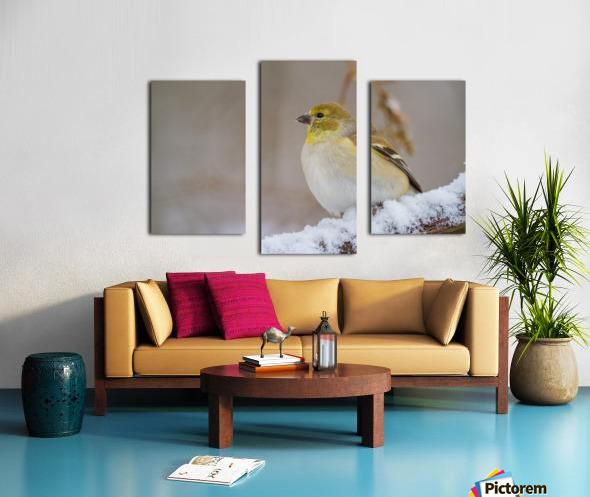 Goldfinch ap 1814 Canvas print