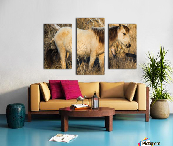 Wild Horse ap 2740 Canvas print