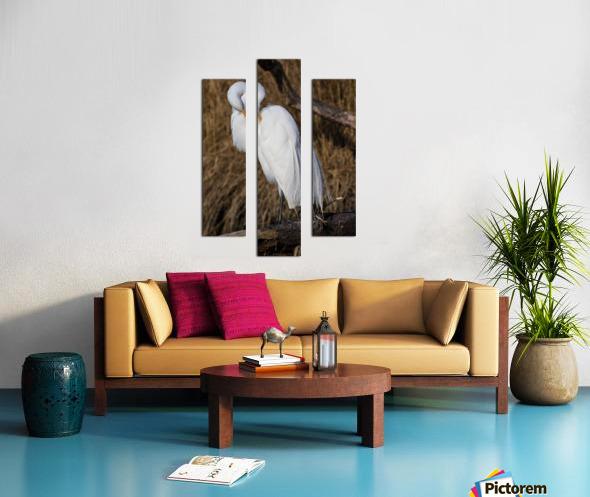 Great White Egret ap 2767 Canvas print