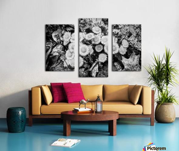 Flowers ap 2222 B&W Canvas print