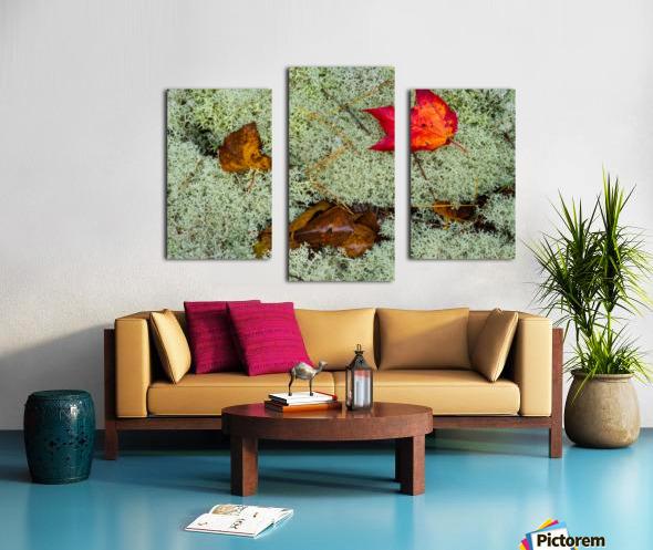 Leaves  N  Lichen ap 1553 Canvas print