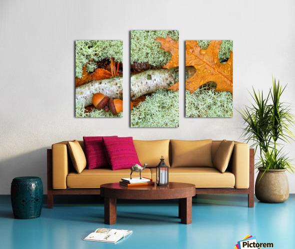 Pin Oak Leaf ap 1557 Canvas print