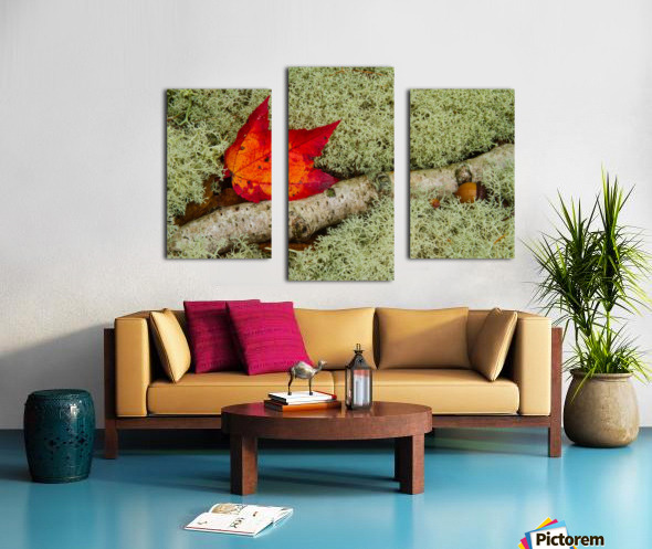 Maple Leaf ap 1555 Canvas print