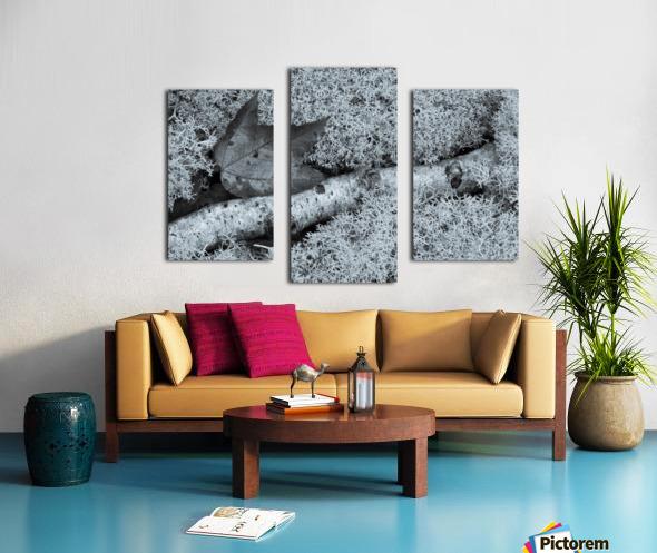 Maple Leaf ap 1554 B&W Canvas print