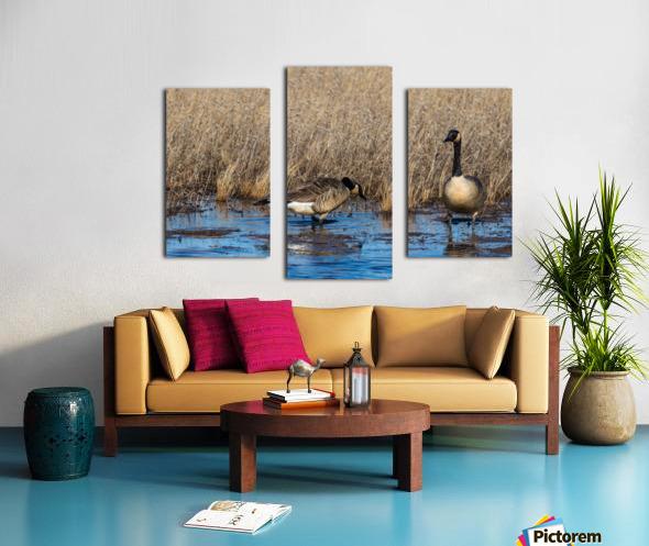 Canada Geese ap 2779 Canvas print