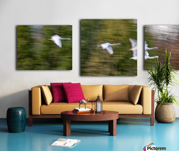 Swan Song ap 2696 Canvas print