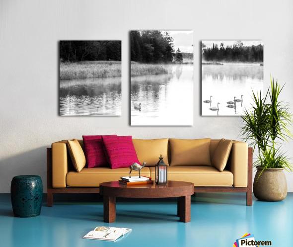 Swan Family ap 2694 B&W Canvas print
