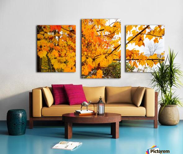Maple Leaves ap 1589 Canvas print