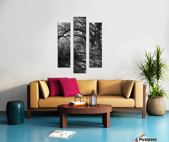Nature Trail ap 2081 B&W Canvas print
