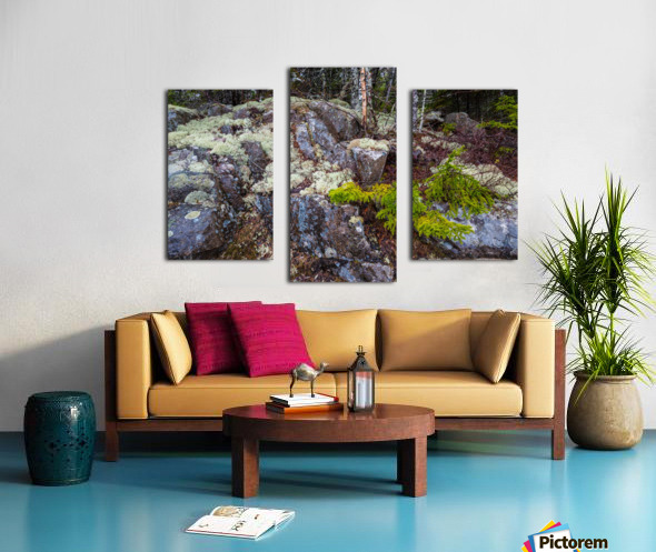 Moss   Lichen ap 2294 Canvas print