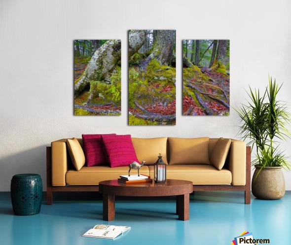 Moss   Lichen ap 2196 Canvas print