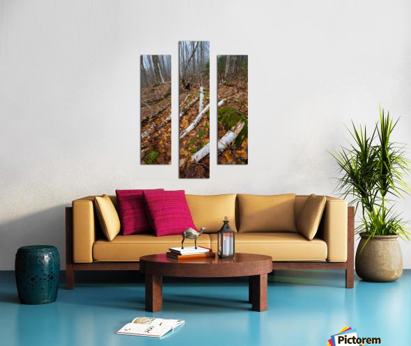 White Birch ap 2186 Canvas print