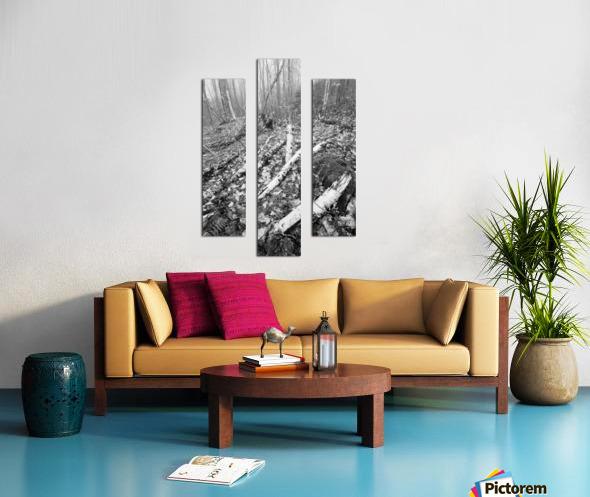 White Birch ap 2186 B&W Canvas print