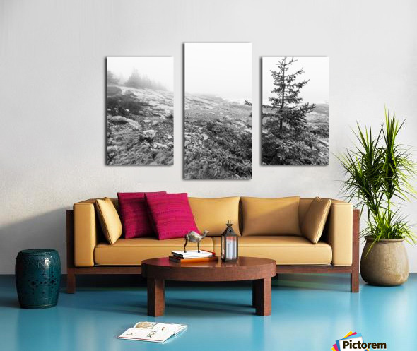 Lone Pine ap 2284 B&W Canvas print