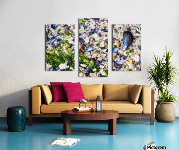 Barnacle Shells ap 1528 Canvas print
