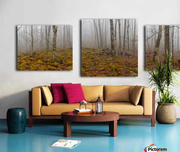 Mystic Forest apmi 1620 Canvas print