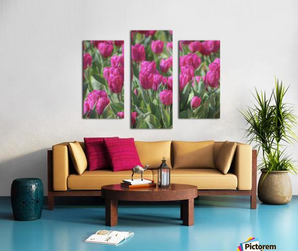 Fantasically Fuschia Tulips Canvas print