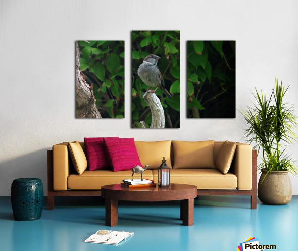 opportuniste    plumes Canvas print