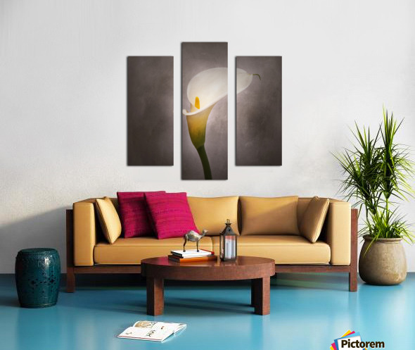 Graceful flower - Calla No. 4 | vintage style  Canvas print