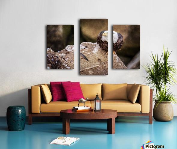 Bald Eagle on a Ledge Canvas print