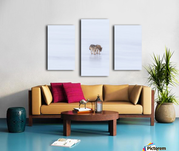 Two Coyote Canvas print