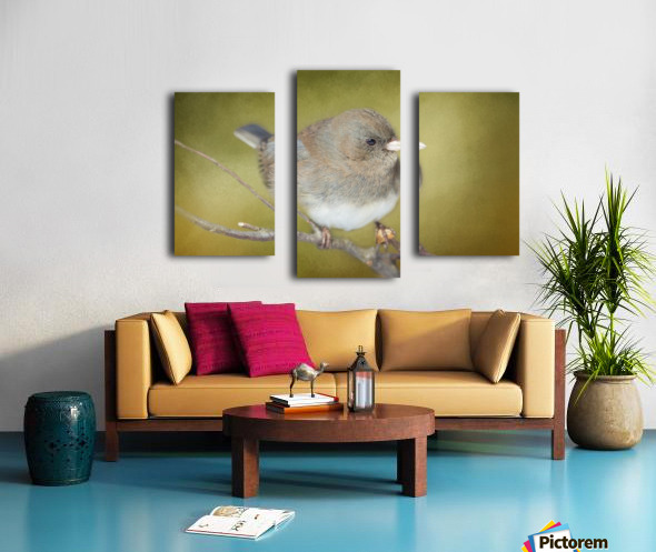 Dark Eyed Junco with Texture Canvas print