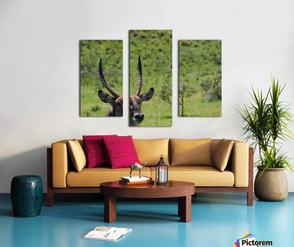 D8061889 B94D 4585 85A6 654F34B6CEB0 Canvas print