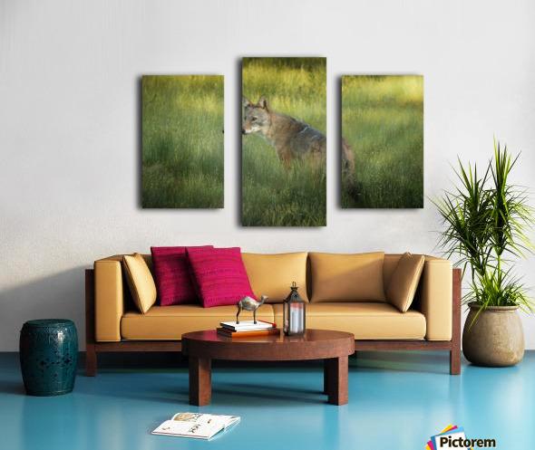 Evening Coyote Canvas print