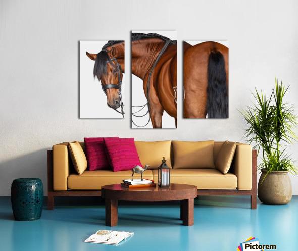 Bay Horse Portrait Canvas print