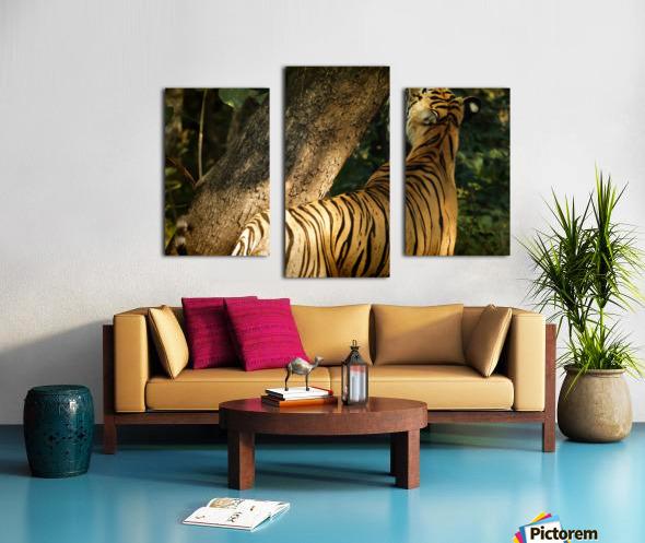 Indian Tiger Canvas print