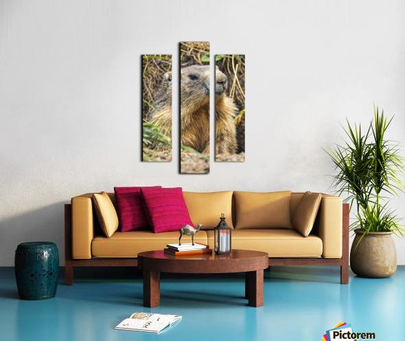 Alpine Marmot Canvas print