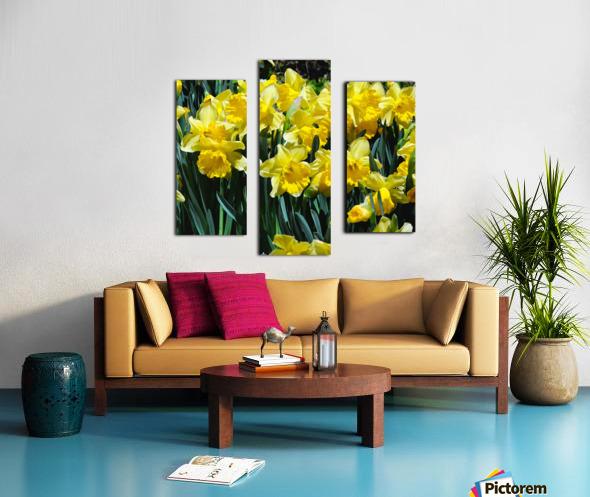 Yellow Daffodils wc Canvas print