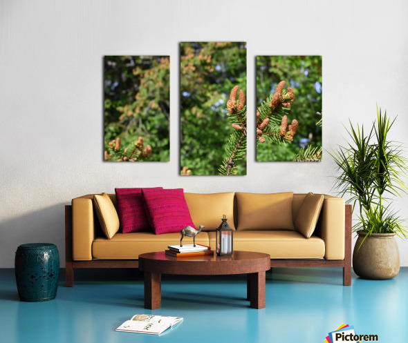 Spruce twig and background Canvas print