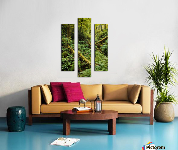 Fern Hollow Canvas print
