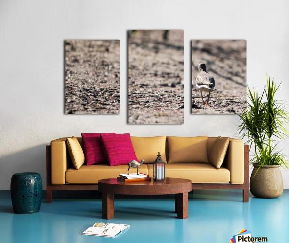 Lonely Sandpiper Canvas print