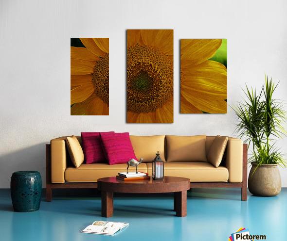 Enhanced Sunflower Canvas print