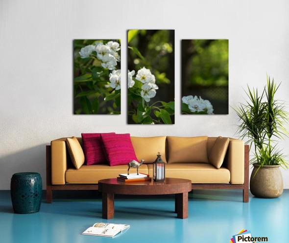 Poirier en fleurs 1  Impression sur toile