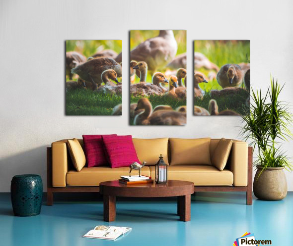 Goslings Gathered Canvas print