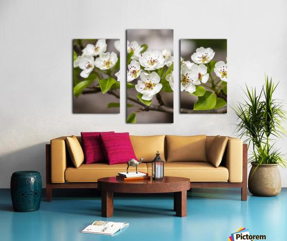 Poirier en fleurs 2 Canvas print