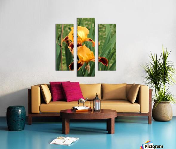 Yellow Brown Iris Canvas print