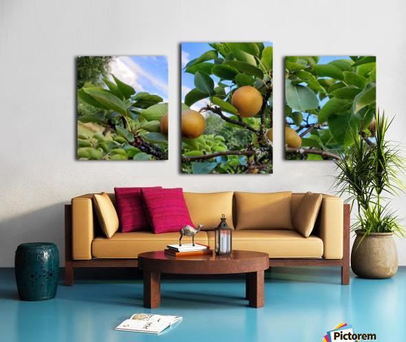 Asian Pears Canvas print