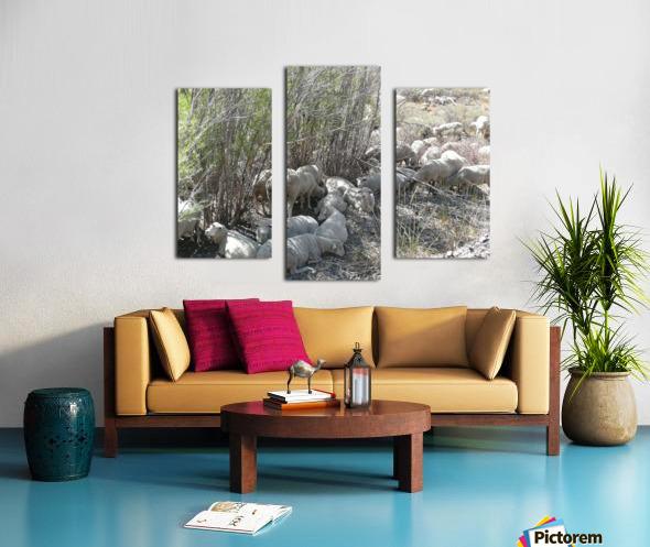 Sheep Huddle Canvas print