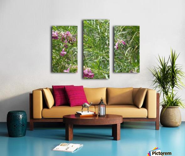 hummingbirdindesertwillow lrg Canvas print