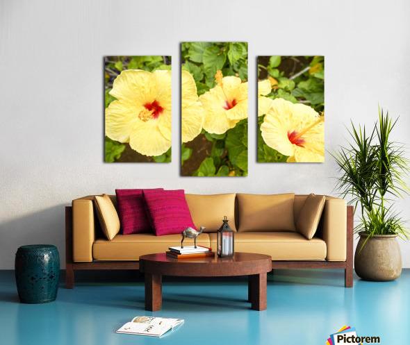 Hibiscus Trio   Tropical Flowers Hawaii Canvas print