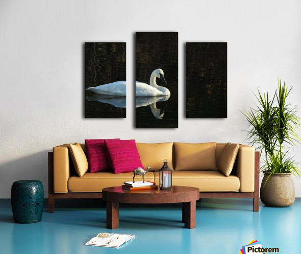 Trumpeter Swan at Estuary Canvas print