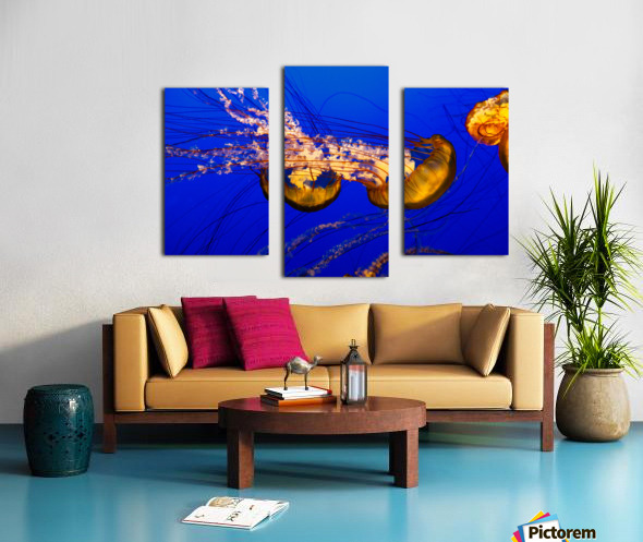 Monterey Jellyfish Canvas print