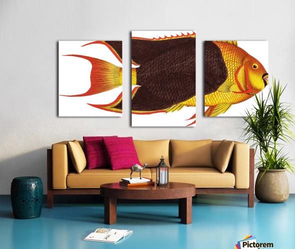 Vintage Fish Wall Art Prints  Canvas print