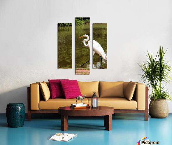 Strutting Egret Canvas print