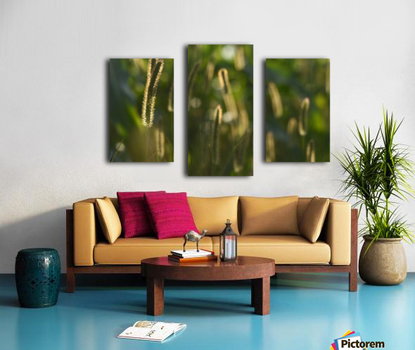 Glowing field grass Canvas print