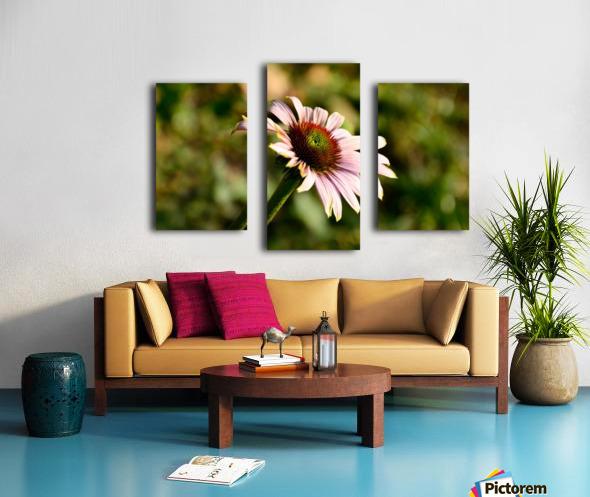 Autumn Echinacea Canvas print